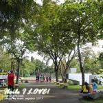 Plaza Trees